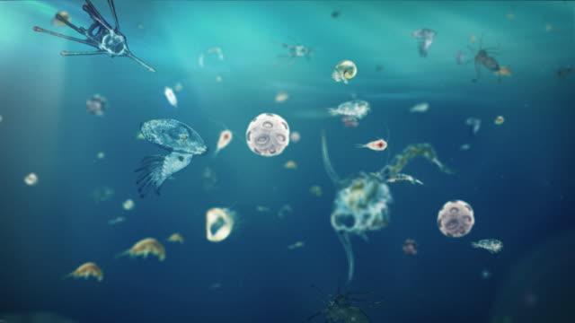 vídeos de stock, filmes e b-roll de espécies de natação em mar - plâncton