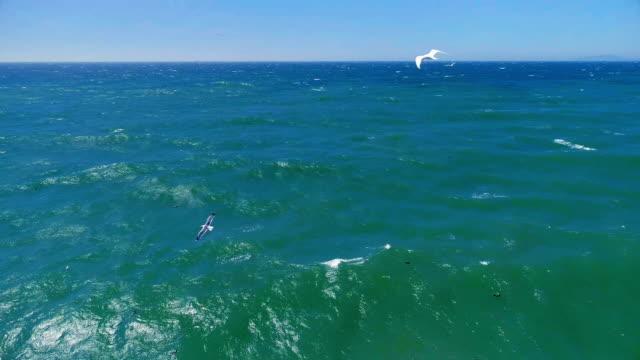vídeos de stock e filmes b-roll de ocean - ave marinha