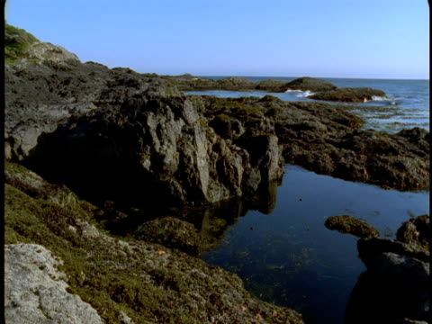 ocean water collects in tide pools on the coast. - gezeitentümpel stock-videos und b-roll-filmmaterial