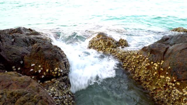 ocean wave smashing rock coastal