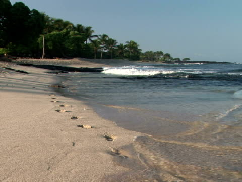 stockvideo's en b-roll-footage met ms ocean waves covering footprints on beach, kohala coast, the big island, hawaii, usa - waaierpalm