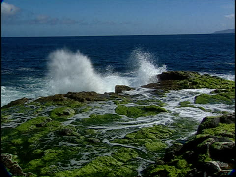 ocean waves crash over a rocky shoreline covered with algae. - alge stock-videos und b-roll-filmmaterial