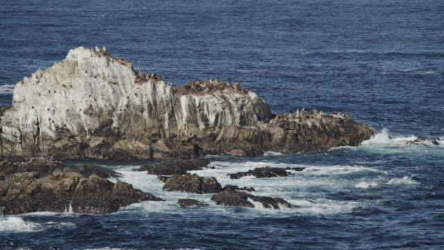 ocean waves splashing on rocks / point lobos, california, united states - アシカ点の映像素材/bロール