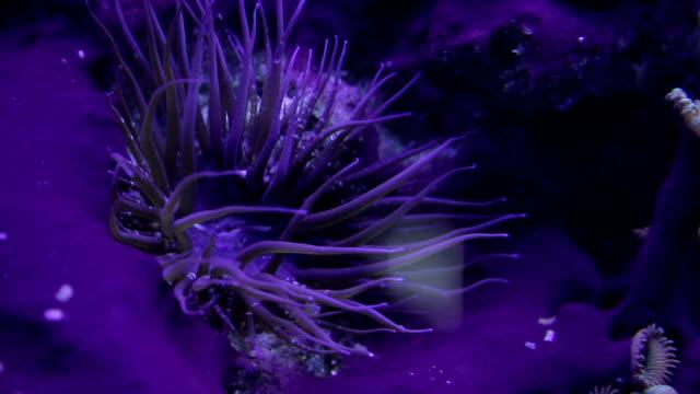 oceanarium - invertebrate stock videos & royalty-free footage