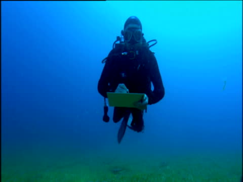 Oceanographer in diving suit swimming over forest of seaweed and holding clip-board, travels towards and over camera