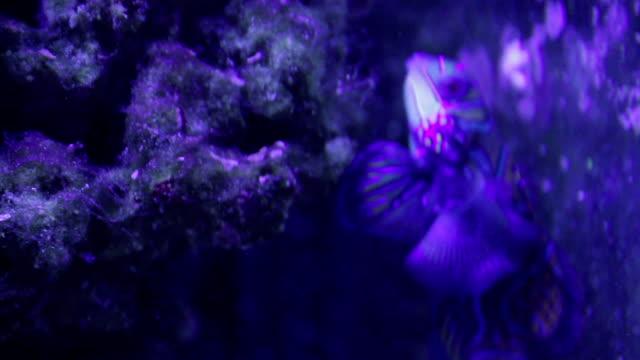 vidéos et rushes de oceanarium - fantaisie