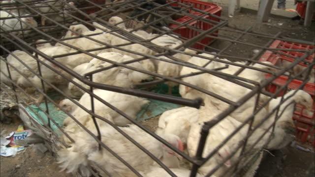october 15 2010 pov walking past cages of chickens at outdoor market / mozambique - käfig stock-videos und b-roll-filmmaterial