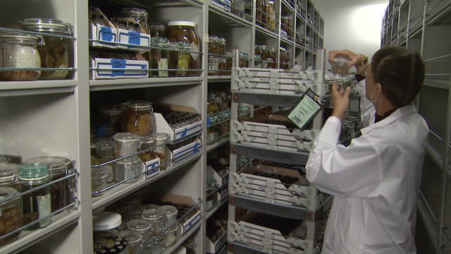 vidéos et rushes de october 17 2008 ts conservator placing specimens on storage shelves containing volume of specimens in glass containers at smithsonian institution /... - smithsonian institution