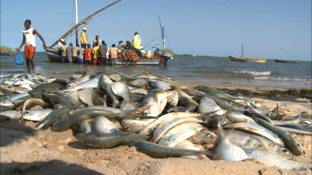 october 17, 2010 dead fish piled on the beach, fishing boats anchored beyond in the water / mozambique - anchored stock videos & royalty-free footage