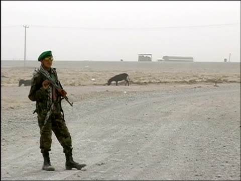 october 2004 afghan national army soldier patrolling road at entrance to kandahar in days leading to first national election / donkeys or mules... - maultier stock-videos und b-roll-filmmaterial