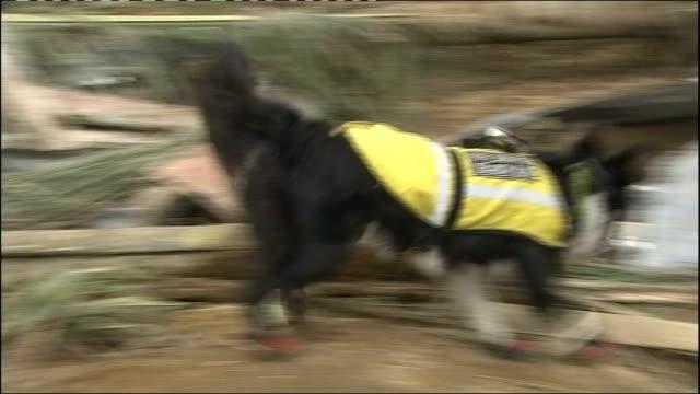 Sumatra Pulau Aiya EXT Rescue dog 'Darcy' searching earthquake wreckage for survivors