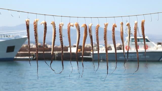 vídeos y material grabado en eventos de stock de pulpo colgado de la cuerda - secar