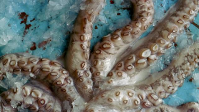 ecu pan zo octopus in ice - dead animal stock videos & royalty-free footage