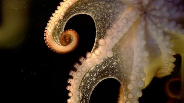 Octopus in the Dark