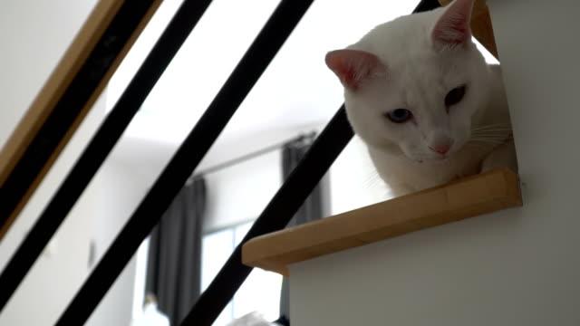奇数目猫 - 動物の頭点の映像素材/bロール