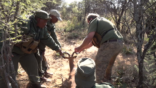 vidéos et rushes de voiced shows exterior wildlife including giraffe rhinoceros and wild dogs in dinokeng game reserve rangers on patrol in park rangers rescuing an... - captive animals