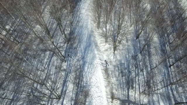 aerial view of dead body left in forest - dead person stock videos & royalty-free footage