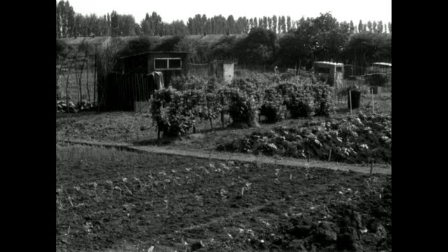 gv of london allotment garden with penalty notice; 1965 - 1965 stock videos & royalty-free footage
