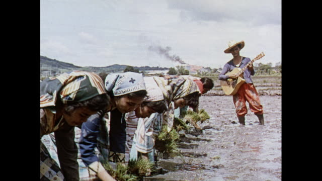 MONTAGE of rice planting in Philippines