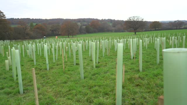 of rows of trees planted ahead of national tree week community volunteers and thames 21 employees plant a range of oak, holly, birch, ferns, willow,... - planting stock videos & royalty-free footage
