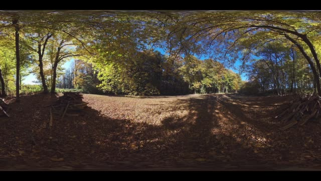 360VR of woodpiles in forest in autumn colorful foliage
