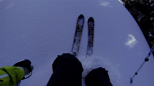 Off Piste Skiing through trees in sun