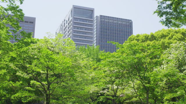Office building and trees at Hibiya Park in Tokyo, Japan