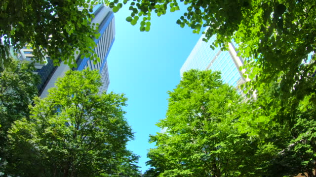 office building from below - lush video stock e b–roll