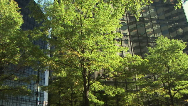 ms, office buildings with trees in foreground, charlotte, north carolina, usa - charlotte north carolina stock videos & royalty-free footage
