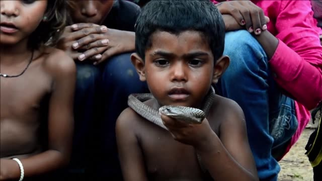 Officially the snake charmers profession is banned in India but the practioners were at the centre of prayers and milk blessings offered to cobras...