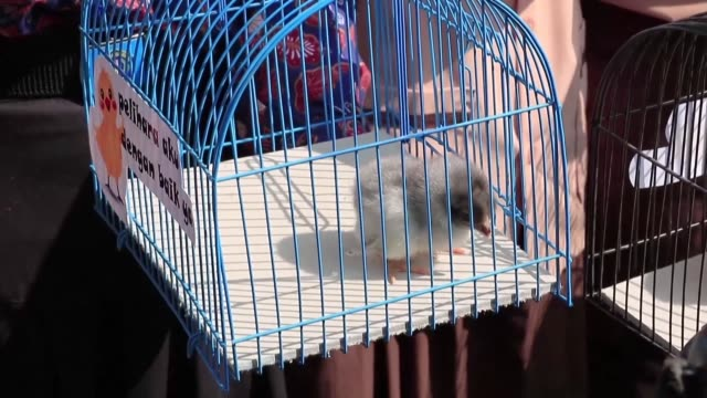 officials in one indonesian city have hatched a plan to wean children off smartphones by giving them their own fluffy chicks to raise - science and technology stock videos & royalty-free footage