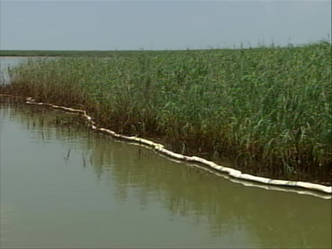 oil coated marsh grasses zoom outmarsh island lined with absorbent containment booms - porous stock videos & royalty-free footage