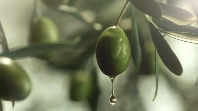 oil dripping from an olive - olive oil stock videos & royalty-free footage