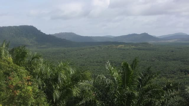 Oil palm trees stand at the Mong Reththy Investment Cambodia Oil Palm Co oil palm plantation a joint venture between Mong Reththy Group Co and TCC...