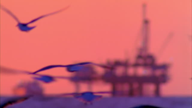 WS R/F Oil rig in sea with seagulls flying in foreground at dusk / Carona del Mar, California, USA