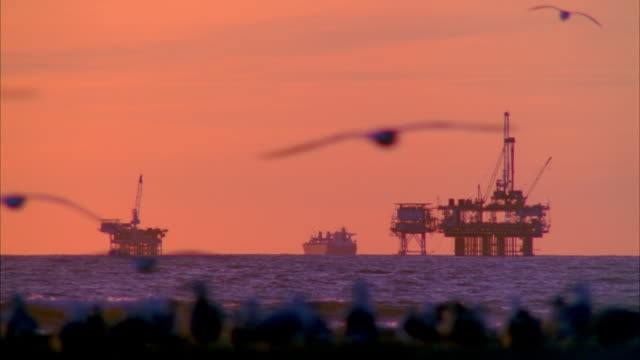 vídeos de stock, filmes e b-roll de ws oil rig in sea with seagulls flying in foreground at dusk / huntington beach, california, usa - plataforma marítima