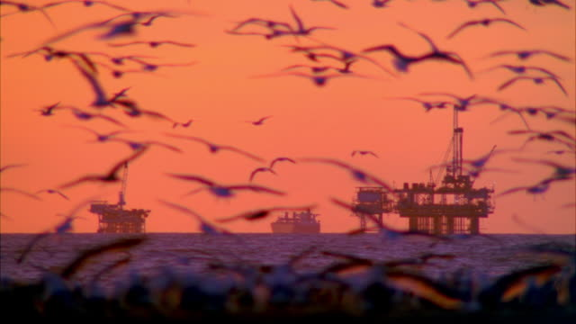 ws oil rig in sea with seagulls in foreground at dusk / huntington beach, california, usa - huntington beach california stock videos and b-roll footage