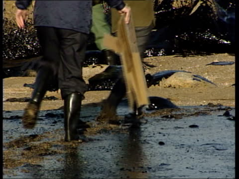 vídeos y material grabado en eventos de stock de environmental disaster; cf tape no longer available variable sound itn spain: galicia: ext tlms people along among rocks covered in oil spilled from... - galicia