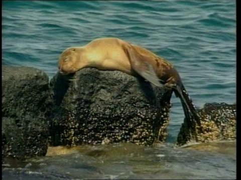 oil spill; oil spill; lib waves near island beach seal lying on rock in sea bv iguana crawling over rock pelican along thru sky tortoise crawling... - pelican stock videos & royalty-free footage