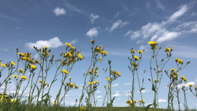 oil tanker and wildflowers in canada - alberta stock videos & royalty-free footage