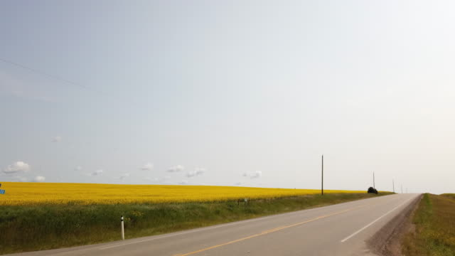oil truck driving by fields of canola flowers in canada - fuel and power generation stock videos & royalty-free footage