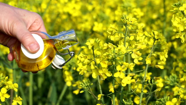 oilseed rape - rapeseed oil stock videos and b-roll footage