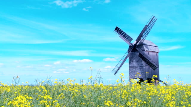 oilseed rape with old windmill - crucifers stock videos & royalty-free footage