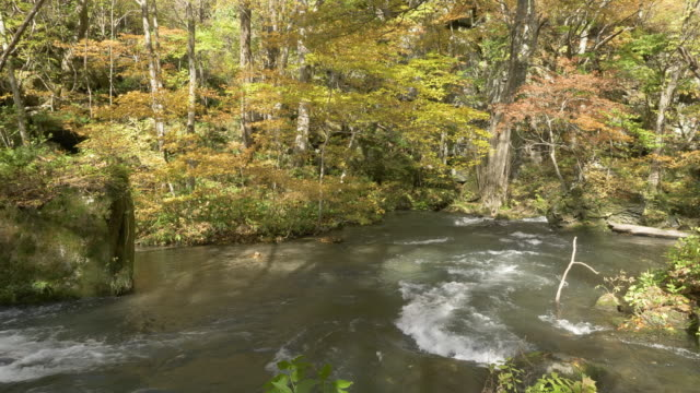 oirase river flows through forest in autumn, japan - satoyama scenery stock videos & royalty-free footage