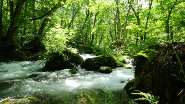 oirase stream and green leaf - 川点の映像素材/bロール