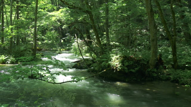 oirase water stream and green forrest - 川点の映像素材/bロール