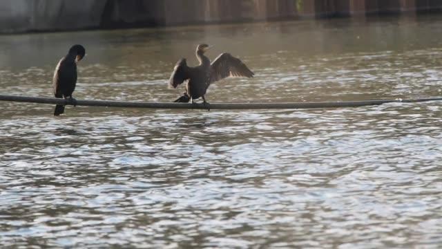 vidéos et rushes de oise river on december 9 2019 in pontoise france - bruno levesque