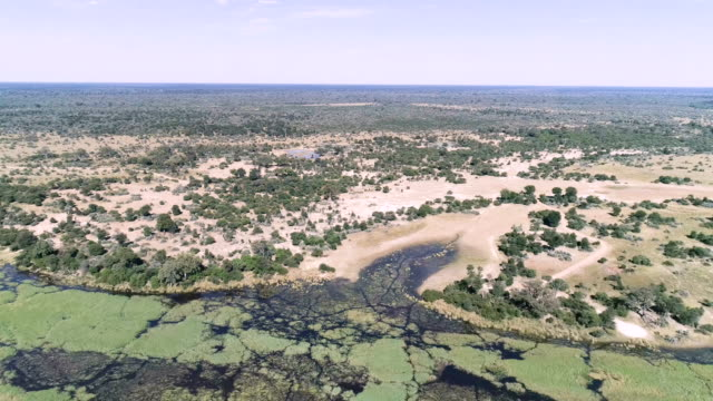 Okavango river. Drone point of view.