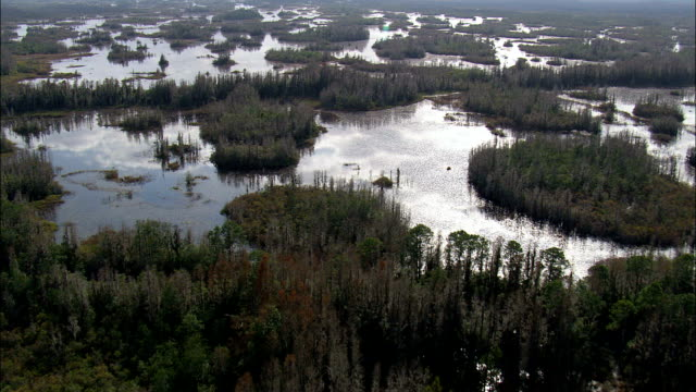 okefenokee swamp  - aerial view - georgia,  ware county,  united states - okefenokee national wildlife refuge stock videos and b-roll footage