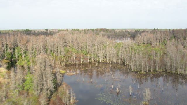 aerial ws okefenokee swamp / georgia, united states - okefenokee national wildlife refuge stock videos and b-roll footage